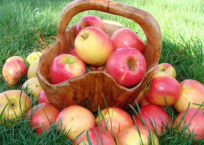 Собрать яблоки для приготовления домашнего сидра