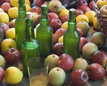 Яблоки для производства сидра
