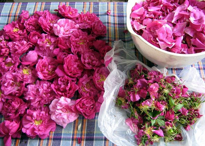 Розовые лепестки для вина из смородины