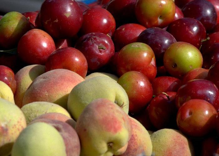 Сливы и персики промыть