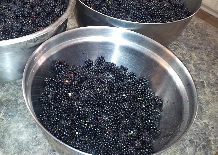 Спелые ягоды ежевики перебрать и помыть