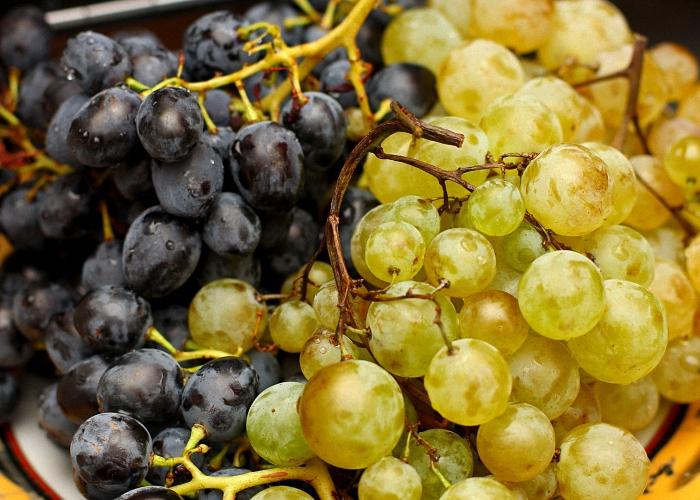 Столовые сорта винограда для коньяка