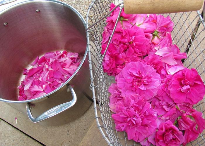Аккуратно оборвите лепестки роз с бутонов
