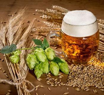 Как сделать пиво из хмеля в домашних условиях рецепты
